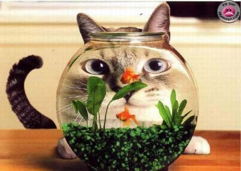 Poisson_chat