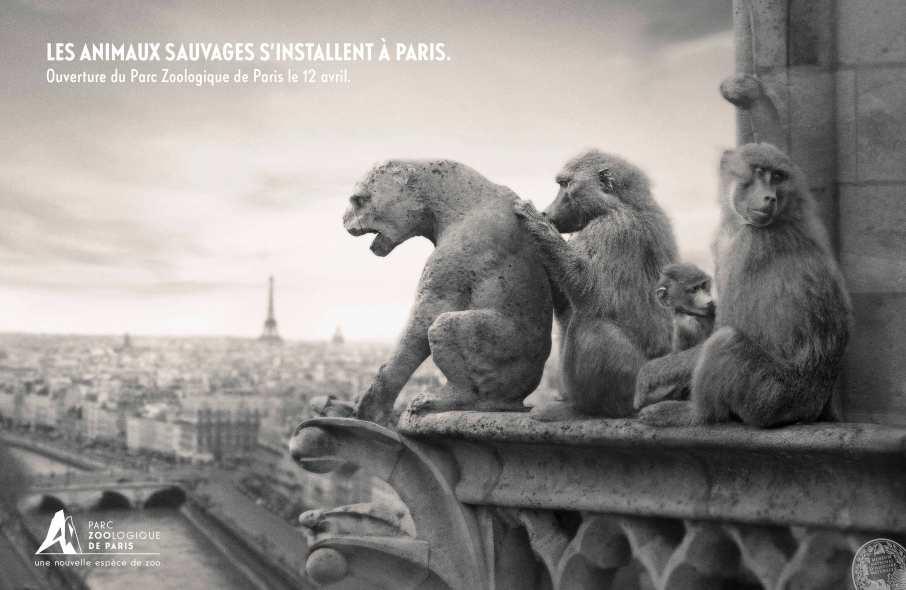 parc zoologique de paris_1 Singe