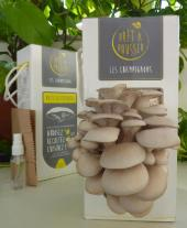 kit champignons
